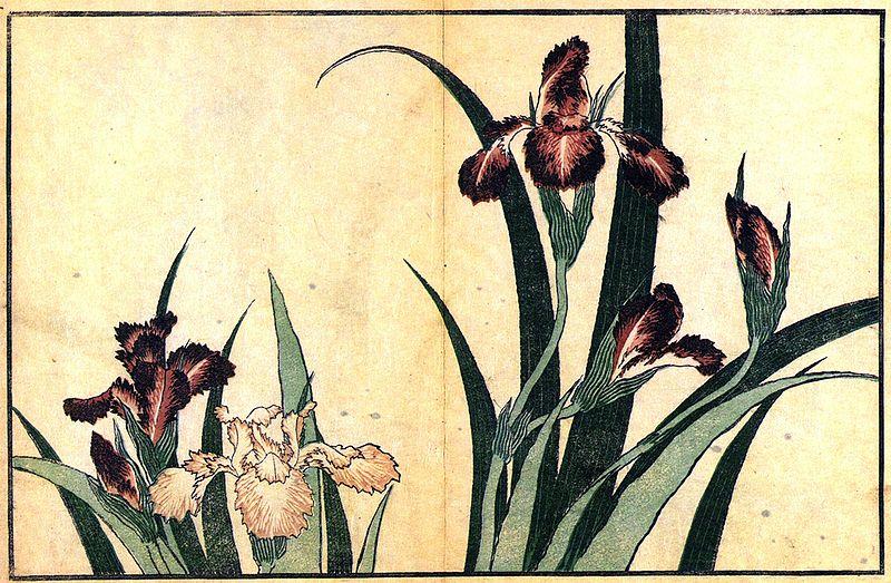 800px-Hokusai_Irises